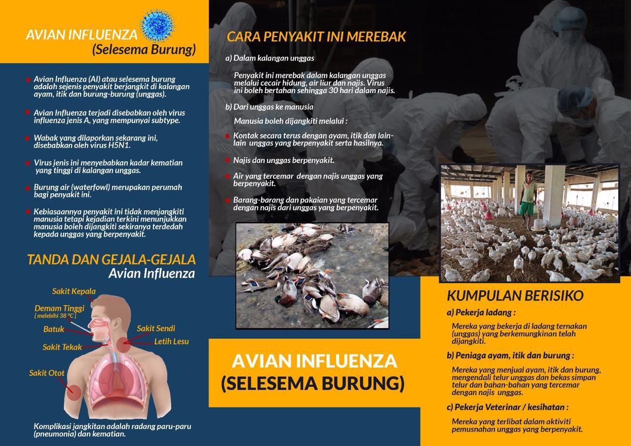 Infografik JKNK H5N1 002